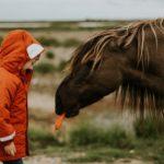 Boy in coat feeding carrot to horse