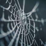 Spider web with dew on it