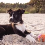 Puppy lying on sand with ball
