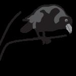 Crow listening on branch