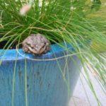 Frog sitting on edge of planter